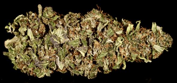 Average Cannabis Nug