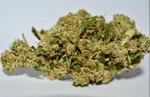 Old Cannabis Flower